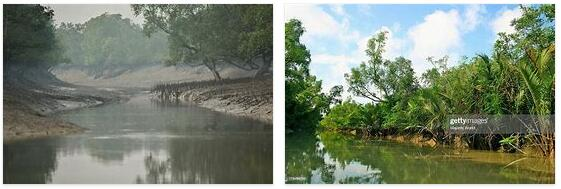 Mangrove Forests of the Sundarbans (World Heritage)
